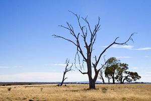 Drought Impacted Entrepreneurs